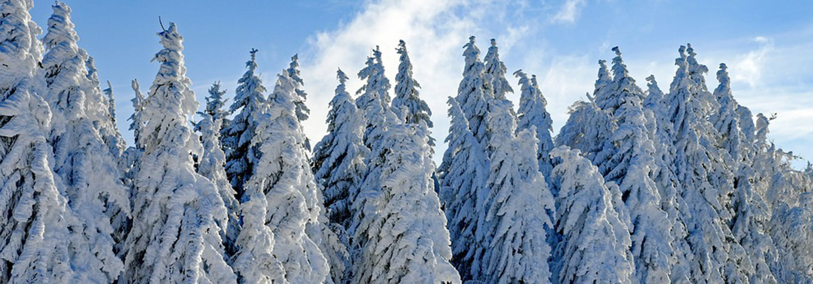 Snow capped trees image slide