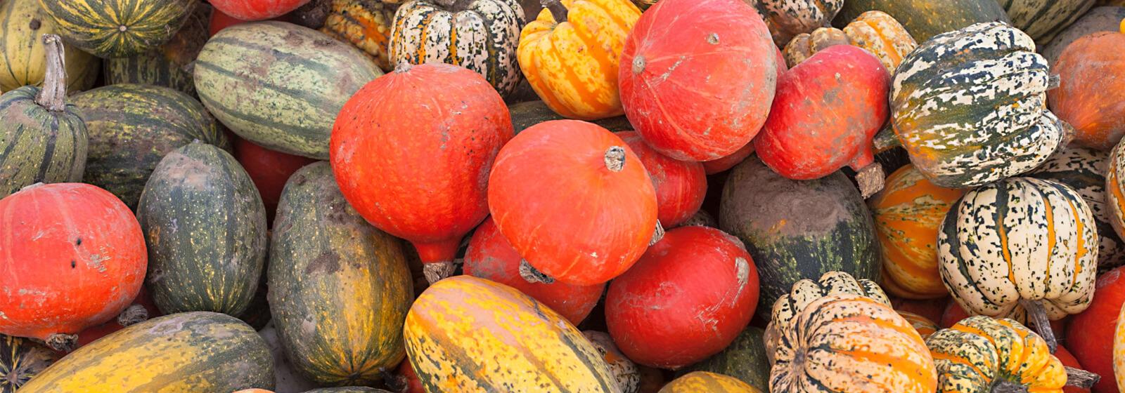 Pumpkins image slide