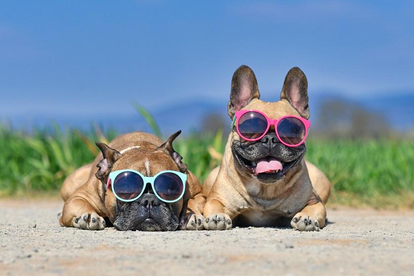 dogs image slide